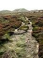 Heading south on a peaty trail - geograph.org.uk - 581132.jpg