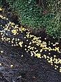 Hebden Bridge Duck Race - geograph.org.uk - 395922.jpg