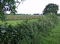 Hedgerow near Cridmore Farm - geograph.org.uk - 512610.jpg