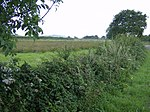 Hedgerow near Cridmore Farm - geograph.org.uk - 512610.jpg