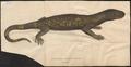 Heloderma horridum - 1700-1880 - Print - Iconographia Zoologica - Special Collections University of Amsterdam - UBA01 IZ12500003.tif