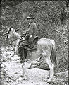 Henry C Cowles in the Santa Catalina Mountains Arizona 1913.jpg