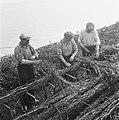 Herstelling Nollegat Vlechten van matten van rijshout, zg rijswerk, Bestanddeelnr 900-8381.jpg