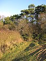 Hill Crofts wood - geograph.org.uk - 1637726.jpg