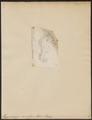 Hippocampus ramulosus - 1700-1880 - Print - Iconographia Zoologica - Special Collections University of Amsterdam - UBA01 IZ14500041.tif