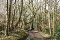 Hittisleigh, lane near Coltsfoot Farm - geograph.org.uk - 348403.jpg