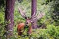 Hoge Veluwe National Park, Otterlo, Netherlands (Unsplash uC3fQgJ5OD0).jpg
