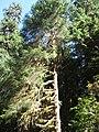 Hoh Rainforest - Olympic National Park - Washington State (9780104665).jpg