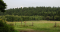 Hoher Vogelsberg Herchenhain Wood Pasture Cattle.png