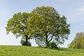 Horn-Bad Meinberg - 2015-05-10 - LSG-4118-0001 (20).jpg