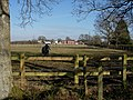 Horse Paddock by New Forest - geograph.org.uk - 1302021.jpg