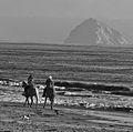 Horses on a Beach (10803017926).jpg