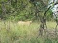 Hunting (394318910).jpg