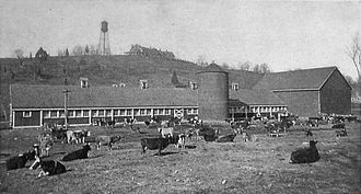 Cattle, a large barn, and silo; a large hotel on a hill in the background