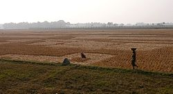 Indo-Bangladeshi Barrier.JPG