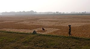Immigration - The Indo-Bangladeshi barrier in 2007. India is building a separation barrier along the 4,000 kilometer border with Bangladesh to prevent illegal immigration.