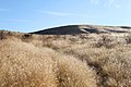 Invasive cheatgrass (8597688067).jpg