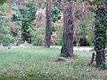 Jókai kertje 2012 (53).JPG