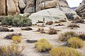 JOSHUA TREE NATIONAL PARK (15299004272).jpg