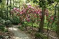 Jenkins Arboretum - DSC00630.JPG