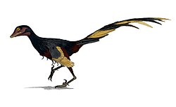 Jinfengopteryx, illustration av Matt Martyniuk.