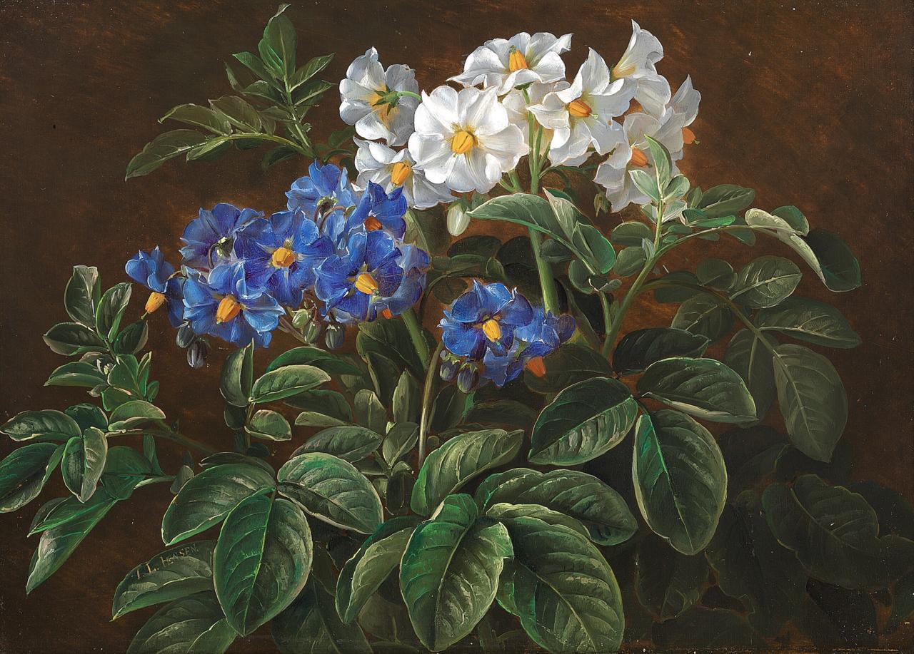 Johan Laurentz Jensen - Hvide og blå blomster.png