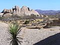 Joshua Tree National Park - panoramio (19).jpg
