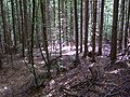Julian Alps Shots Summer 2004 (24).JPG