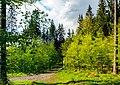 Junger Wald - panoramio.jpg