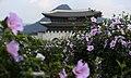 KOCIS Korea Mugunghwa Gwanhwamun 03 (9493818668).jpg