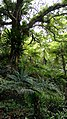 Kadoorie Farm and Botanic Garden - Hong Kong - 0503181338b.jpg