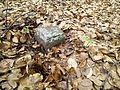 Kamień graniczny złamana ćwięk.jpg