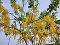Kanikkonna 001, Ezhimala, Kannur, Kerala.jpg