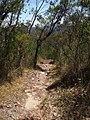 Kariong Ridge - panoramio (7).jpg