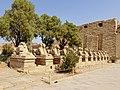 Karnak Tempel Dromos 32.jpg