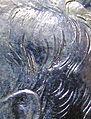 Kennedy-Half-Dollar-Accented-Hair.jpg
