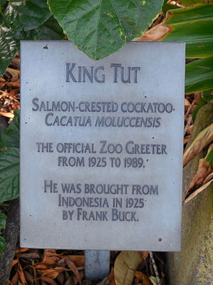 Frank Buck (animal collector) - A plaque at the San Diego Zoo beneath a bronze statue of King Tut, the Zoo's longtime greeter, indicates that the cockatoo was brought to the United States by Buck.