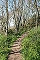 Kingston, coast path near Wrinkle Wood - geograph.org.uk - 786462.jpg