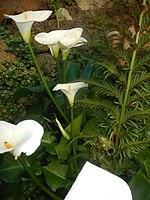 Kirstenbosch National Botanical Garden by ArmAg (16).jpg