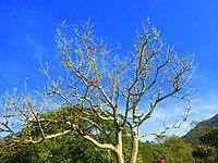 Kirstenbosch National Botanical Garden by ArmAg (23).jpg