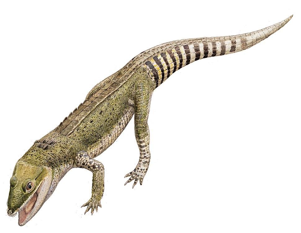 Knoetschkesuchus2