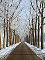 Koesteeg in de winter - panoramio.jpg