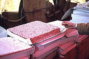 Krill fishery - Deep frozen plates of Antarctic krill for use as animal feed and raw material for cooking