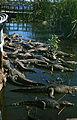 Krokodilfarm in Boca de Guamá Kuba 1972 PD 1.jpg