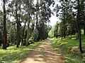 Kunming Botanical Garden - DSC02753.JPG