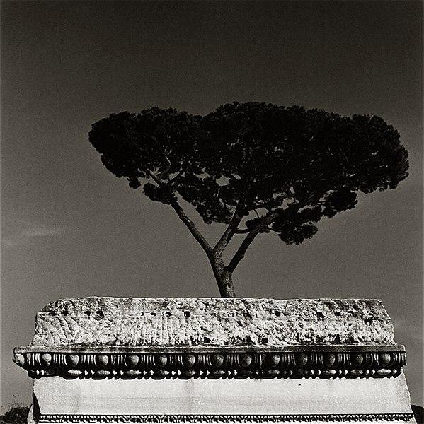 File:LA2 Roma di Augusto De Luca.jpg