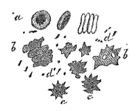 La Nature- 1873 - Manuel du microscope - globules rouges - p080.png