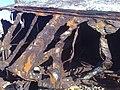 La Perouse NSW 2036, Australia - panoramio - noah.odonoghue (25).jpg