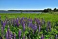 Ladoga skerries national Park. Sortavalsky district. Coast.jpg