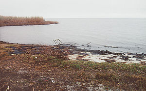 Lake Pontchartrain - Lake Pontchartrain's north shore at Fontainebleau State Park near Mandeville, Louisiana, in 2004
